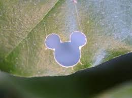 ディズニー葉っぱ隠しミッキー